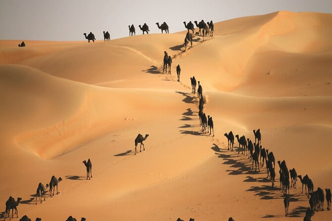 MÁS FOTOS, Full Day LIWA 4x4 Safari With Lunch Included From Abu Dhabi