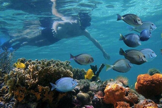 MÁS FOTOS, Full-day Dhow Cruise to Mnemba Island reef for Snorkeling with Lunch