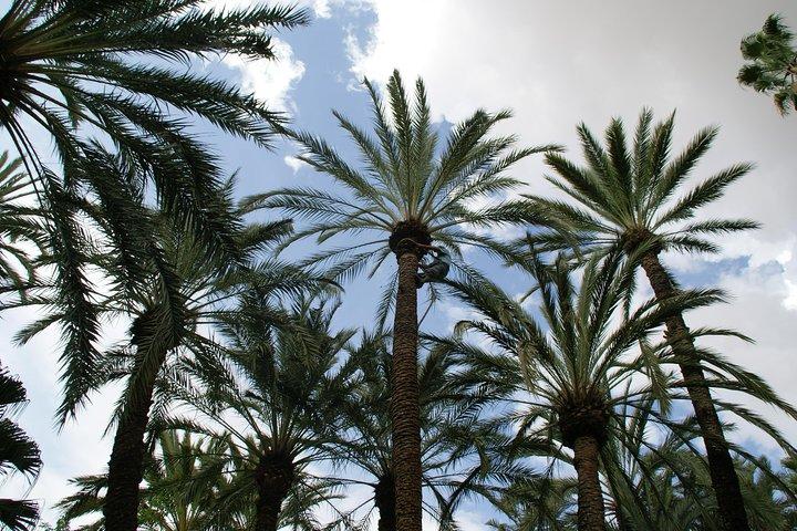 Alicante and Elche Highlights Day Tour from Benidorm, Benidorm, ESPAÑA