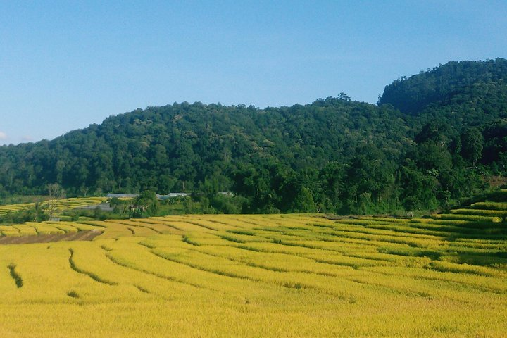 Inthanon Small-Group Day Trip from Chiang Mai with Lunch, Chiang Mai, TAILANDIA
