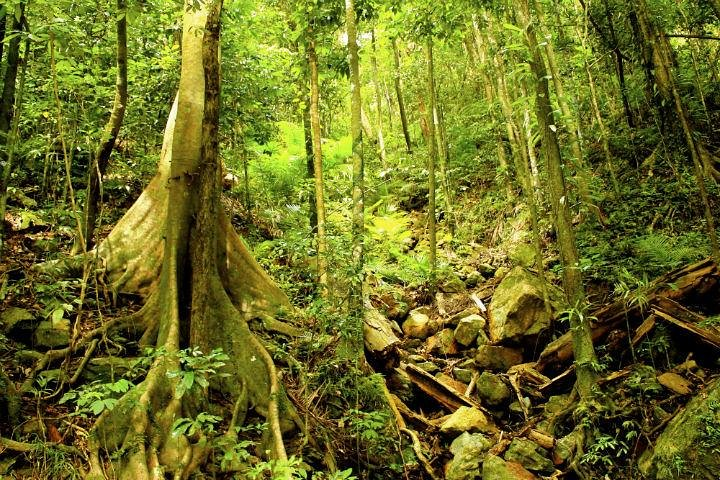 Barron Gorge and Kuranda National Park Half Day Rainforest and Waterfall 4WD Tour from Cairns, Cairns y el Norte Tropical, AUSTRALIA