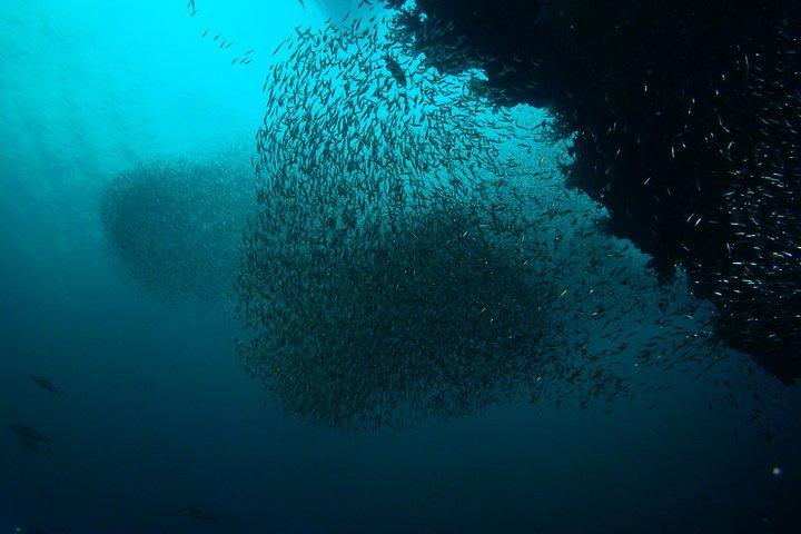 Full-Day Koh Bon Scuba Diving from Phuket, Khao Lak, Tailândia