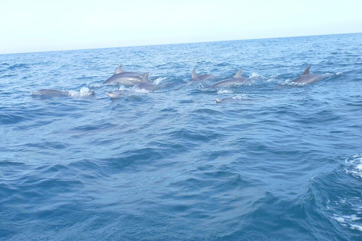 History & Nature Tours in Zanzibar (2 Days / 5 Tours), ,