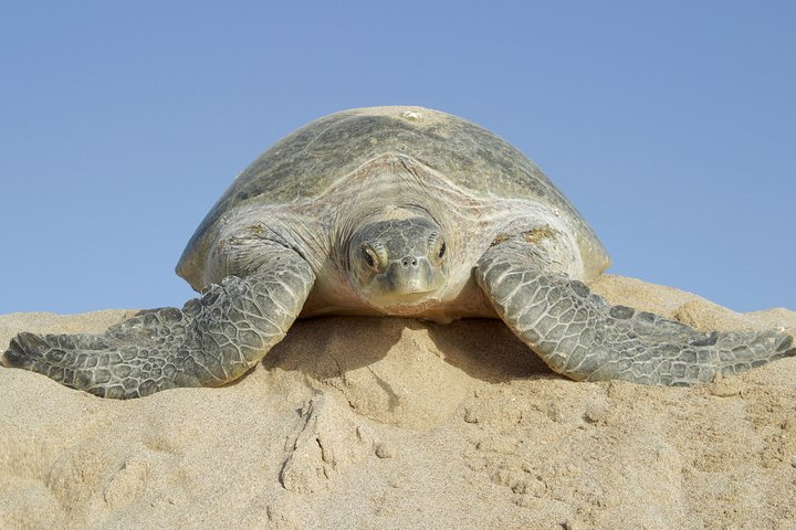 2 Days Muscat Watching Turtles and Wadi Shab Package, Mascate, OMAN