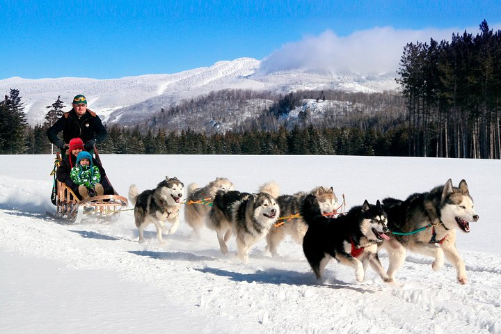 Dogsled Adventure in Mont-Tremblant, Mont-Tremblant, CANADÁ