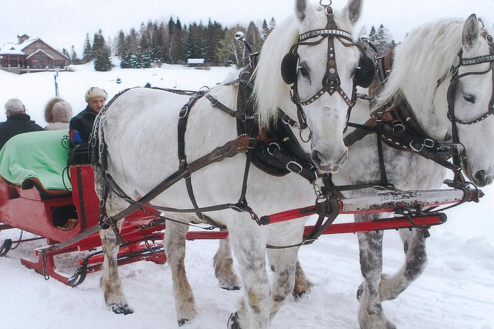 Small Private Sleighride, Mont-Tremblant, CANADÁ