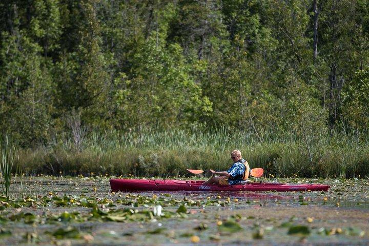 Door County Wetlands Kayak Tour, Green Bay, WI, UNITED STATES