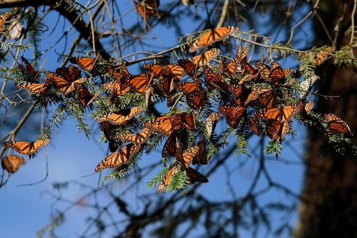 Monarch Butterfly Sanctuary Day Trip from Mexico City, Ciudad de Mexico, Mexico