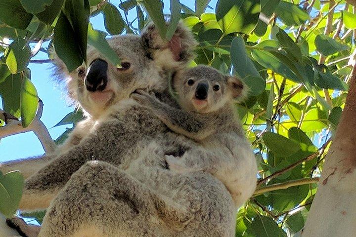 Magnetic Island Tour: Maggie Comprehensive, Isla Magnetic, AUSTRALIA