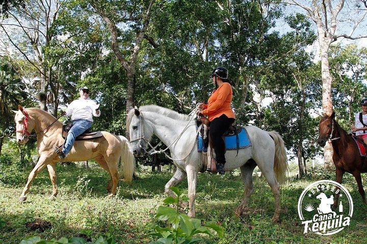 El mejor recorrido a caballo de República Dominicana, Punta de Cana, REPUBLICA DOMINICANA