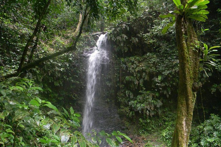 Full-Day Brownsberg Nature Park Tour, Paramaribo, SURINAM