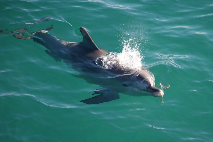 Jervis Bay Dolphin Watch Cruise, Jervis Bay, AUSTRALIA