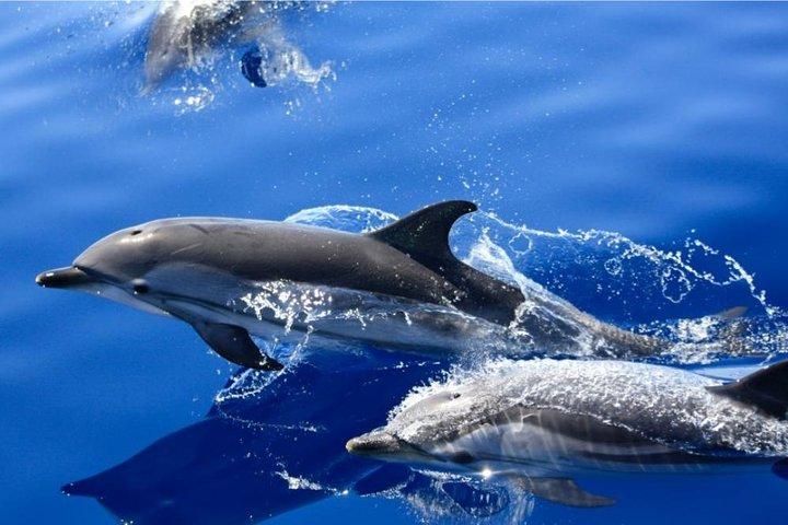 Lobos Island - The dolphin route, Arrecife, ESPAÑA