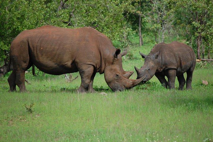 Half-Day Nature Walk in Mosi-oa-Tunya National Park from Livingstone, Livingstone, Zimbábue
