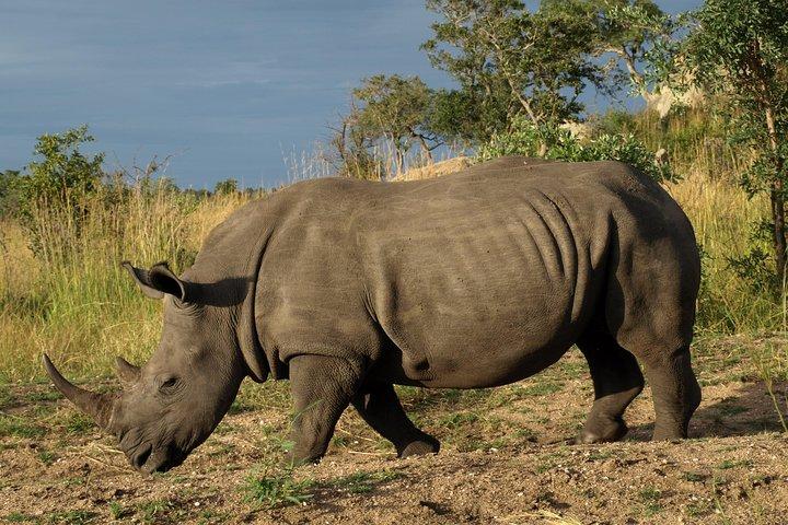 Rhino and Lion Park Guided Closest Safari Reserve to Johannesburg and Pretoria, ,