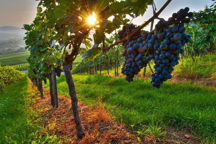 Tour privado pelo vinho: vinícolas Maipo de Mendoza, Mendoza, ARGENTINA