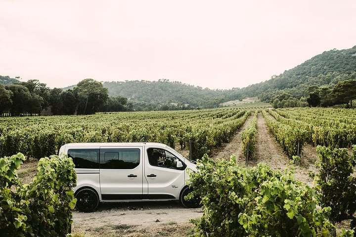 Pic Saint Loup Winetour & food, Montpellier, FRANCIA