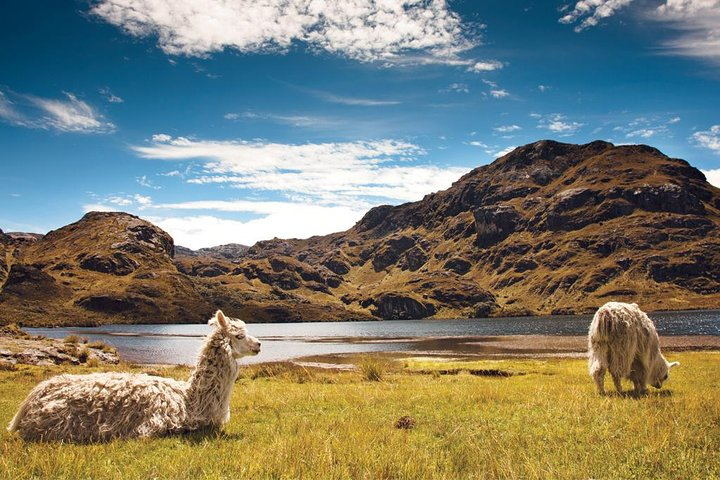 Private Trekking Full-Day Tour at Cajas National Park, Cuenca, ECUADOR