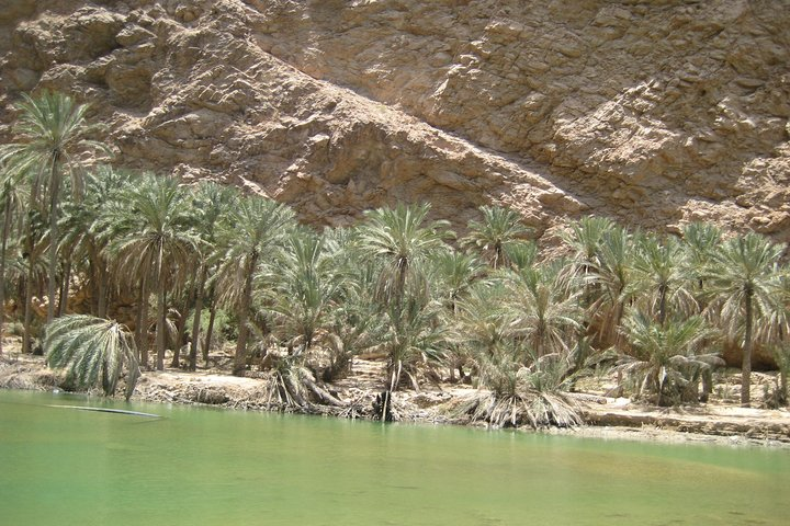 Coastal Tour and Wadi Hike from Muscat, Mascate, OMAN