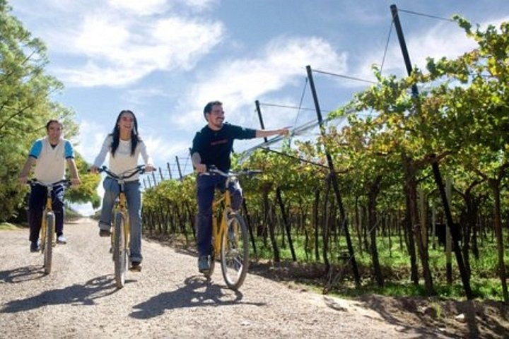 Bike & Wine Tasting with regional food in Zuccardi Winery (from Mendoza), Mendoza, ARGENTINA