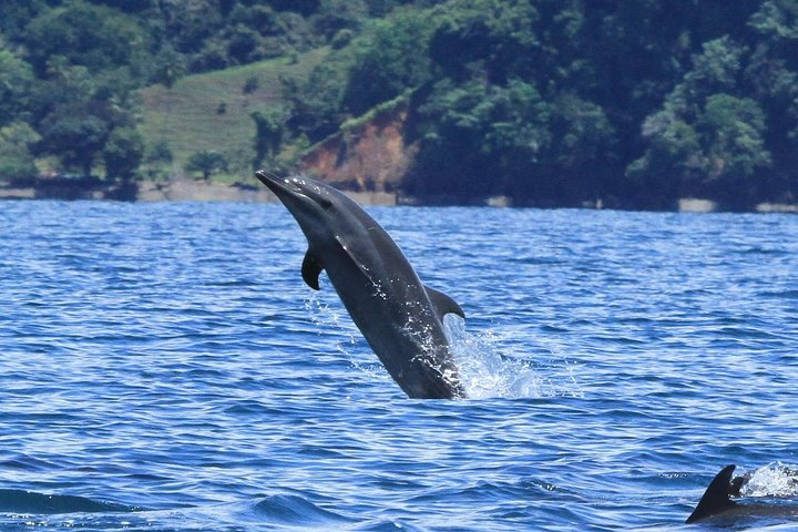 Dolphin watching mangrove snorkeling tour at Golfo Dulce in the Pacific side, Puerto Jimenez, COSTA RICA