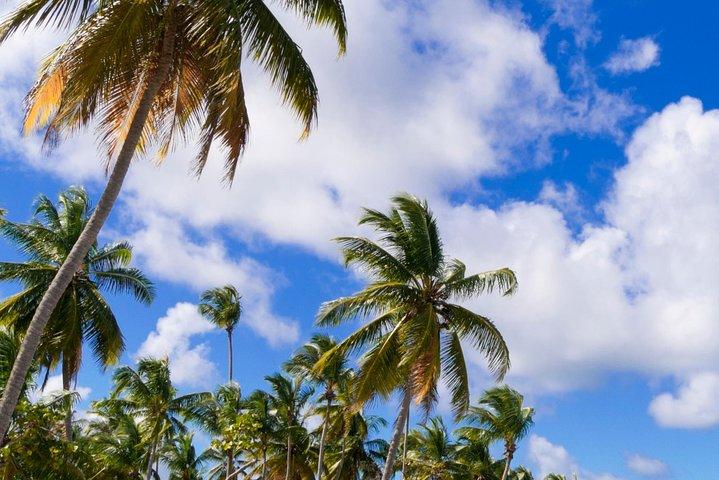 Excursión a la playa de Freeport: traslado de ida y vuelta a la playa de Taino Beach, Freeport, BAHAMAS
