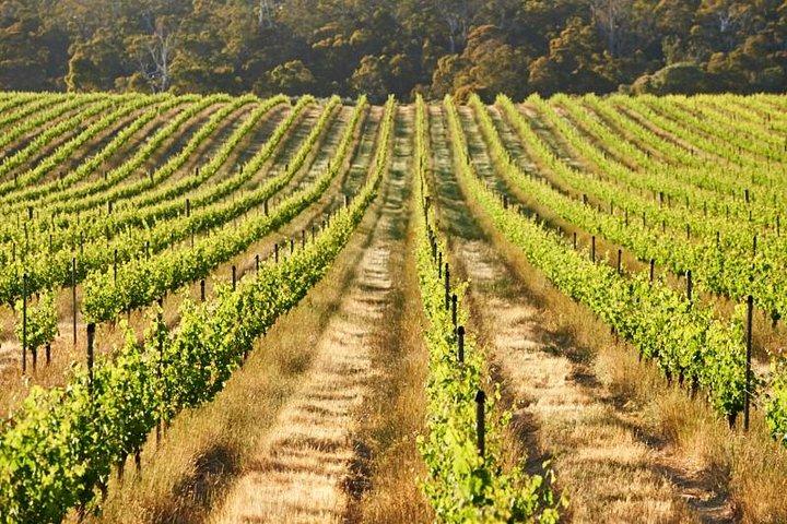 Brown Hill Winemaker's Walk, Busselton, AUSTRALIA