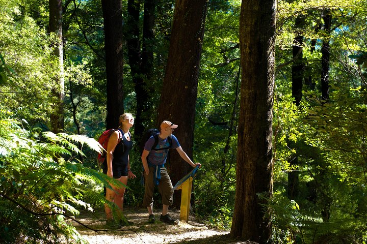 Self-Guided Queen Charlotte Track Walk from Picton, Picton, New Zealand