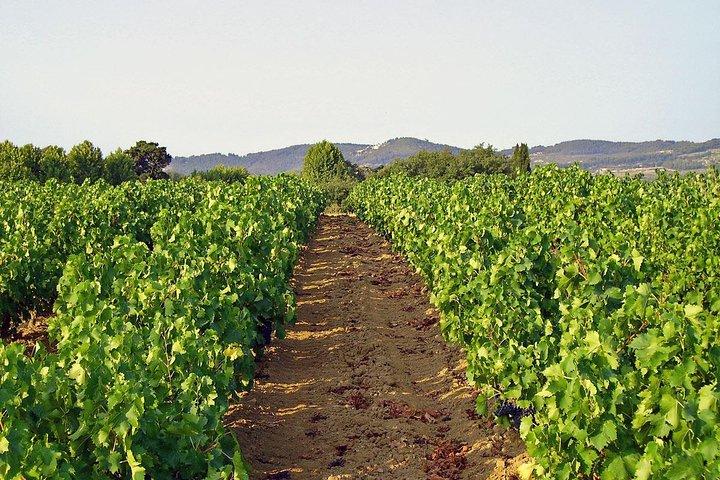 Provence Private Wine Tasting Tour from Marseille, Marsella, FRANCIA