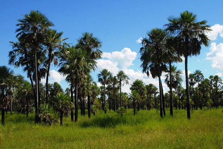 Excursão de dia inteiro para Porto de Chaco, saindo de Assunção, Asuncion , PARAGUAI