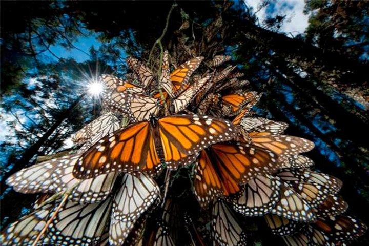 Monarch Butterfly Sanctuary Private Tour from Mexico City, Ciudad de Mexico, Mexico