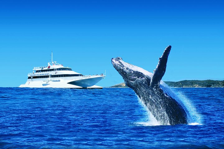 Tangalooma Island Resort Whale Watching Day Cruise with Dolphin Viewing, Brisbane, Austrália