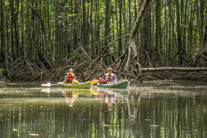 Recorrido de exploración en kayak de los manglares desde Puerto Jiménez, Puerto Jimenez, COSTA RICA