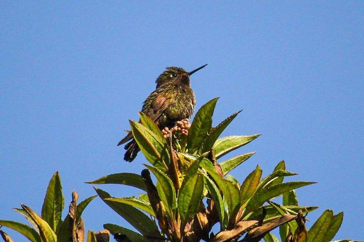 Birdwatching Tour in Cajas National Park from Cuenca, Cuenca, ECUADOR