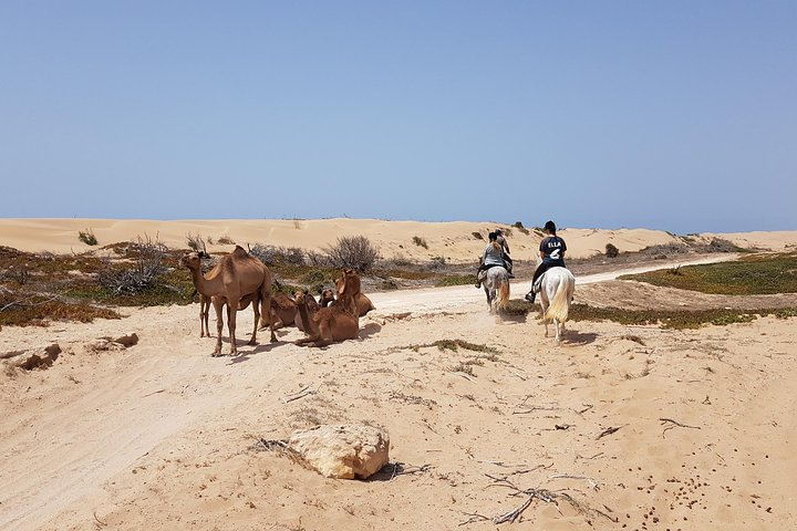 Horse Ride on the Beach in Essaouira, Esauira, MARROCOS
