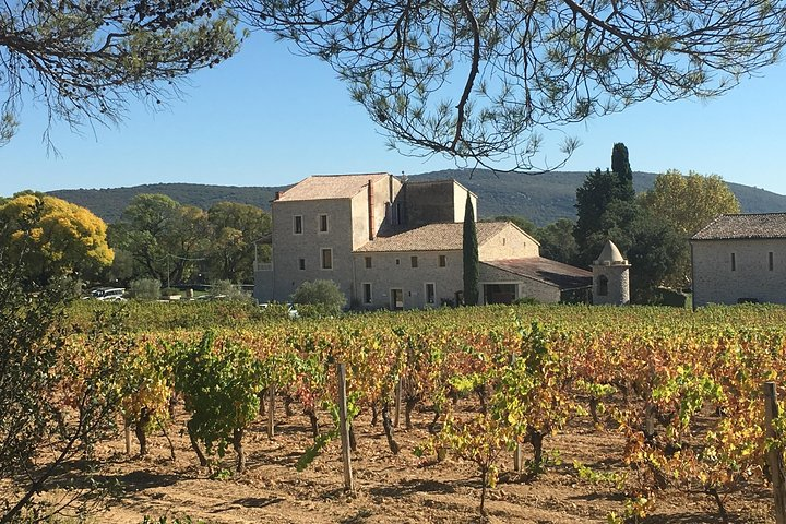 Full Day Pic Saint Loup Wine and Olive Tour with Lunch from Montpellier, Montpellier, FRANCIA