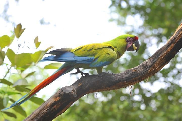 Birdwatching in Cerro Blanco from Guayaquil, Guayaquil, ECUADOR