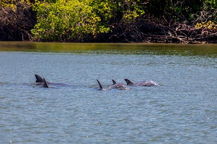 Dolphin Watching Experience in Puerto El Morro from Guayaquil, Guayaquil, Equador