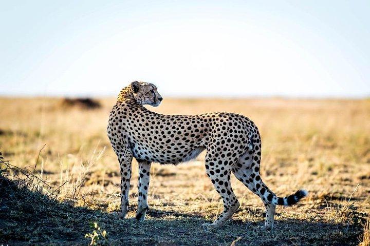 5 Days Tanzania Safari, Arusha, Tanzânia