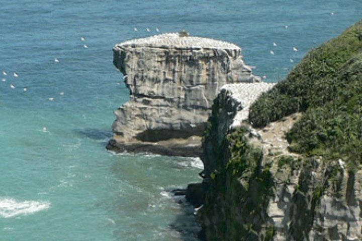 Coast to Coast Auckland Wine Tasting Day Tour, Auckland, NUEVA ZELANDIA