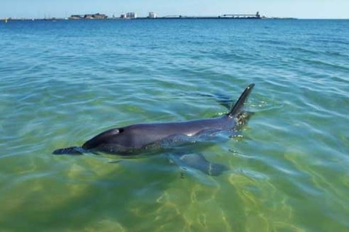 Bunbury Dolphins Discovery Tour - Fly From Perth, Perth, AUSTRALIA