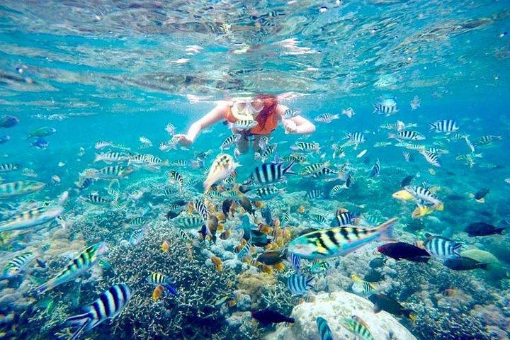 Nusa Penida Snorkeling Adventure (Private & All-Inclusive), Seminyak, Indonesia