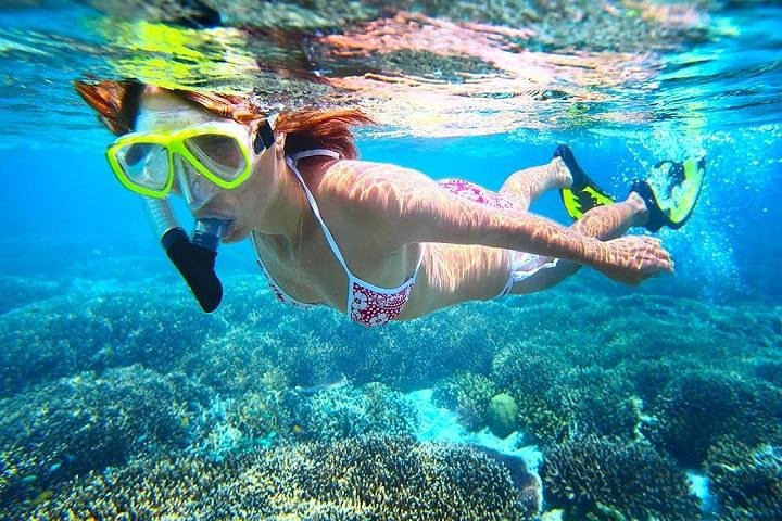 Dolphin Watching and Snorkeling Tour from Muscat, Mascate, OMAN