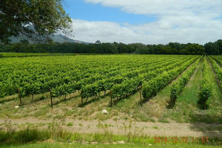 African Story Wine Tours, Cape Town, South Africa