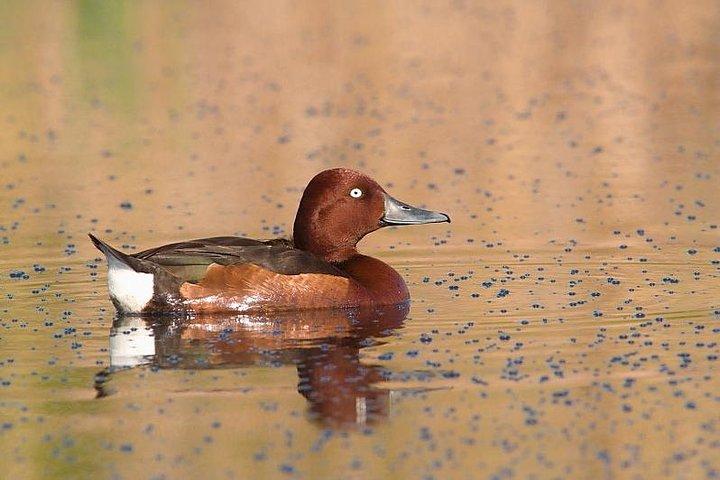 One-day Birding Along the Southern Bulgarian Black Sea Coast, Varna, BULGARIA