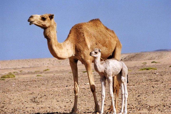 Private Safari Wahiba Sands and Wadi Bani Khalid from Muscat, Mascate, OMAN