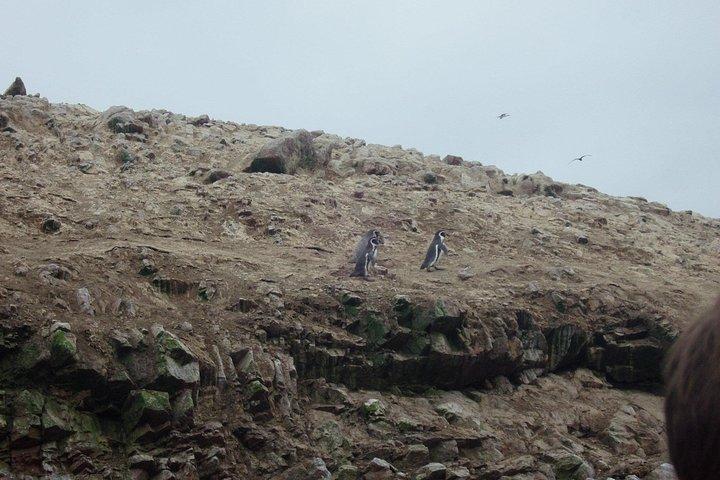 From Lima: Ballestas, Nazca Lines & Huacachina Oasis, Lima, PERU