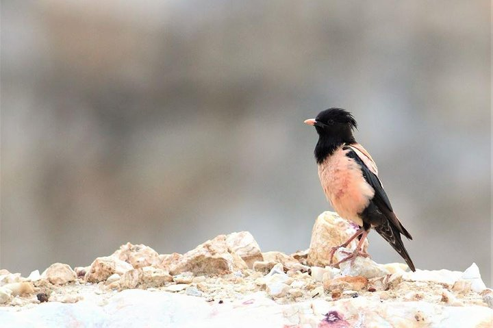One-day Birding Along the Northern Black Sea Coast, Varna, BULGARIA