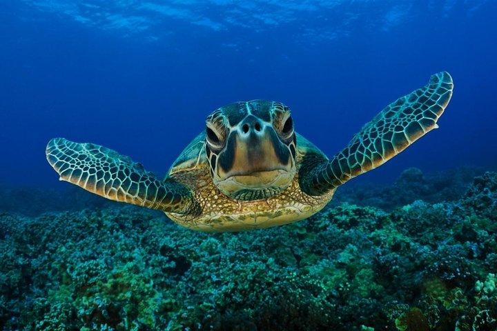 Dalyan Day Trip from Fethiye Including River Cruise, Mud Baths and Iztuzu Beach, Fethiye, TURQUIA