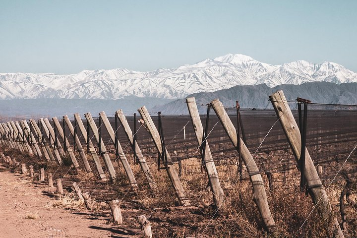 Winemaker: exclusive wine tour with gourmet lunch, Mendoza, ARGENTINA